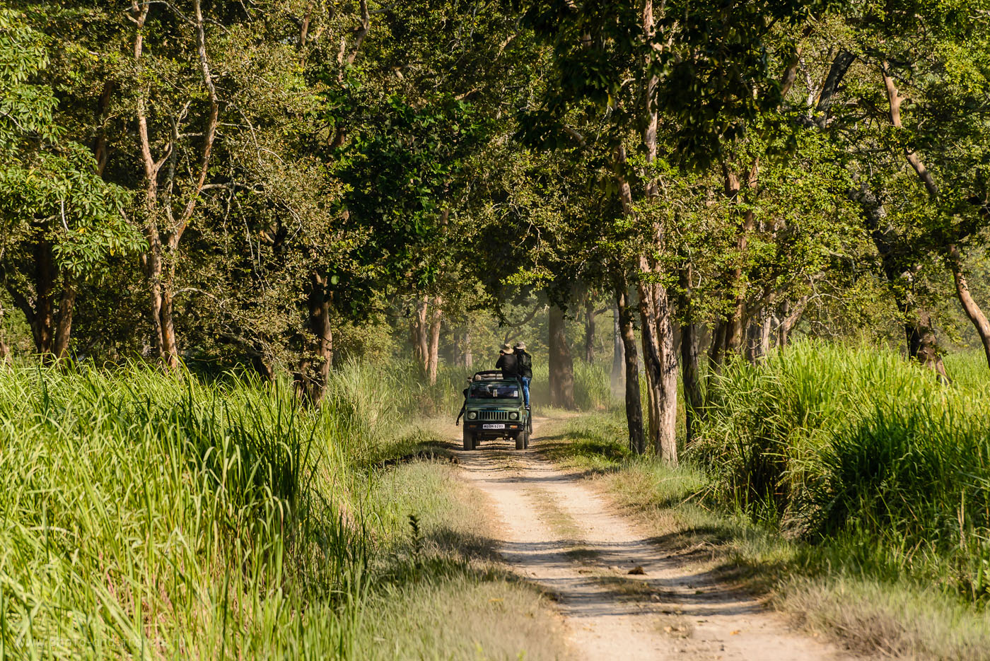 Фотография 26. Джип-сафари в Kaziranga National Park. Думаю, если выехать на рассвете, будет побольше животных. 1/250, -0.33, 9.0, 200, 300.