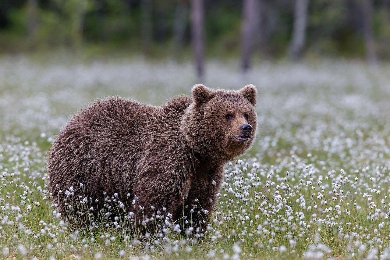 продолжения во фрязино медведь на дереве получить автокредит иностранному