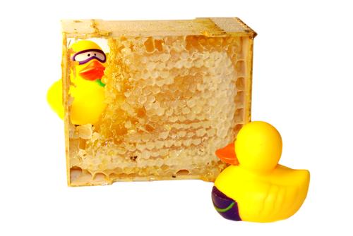 В поисках лучшей жизни уточки прикинулись пчелами