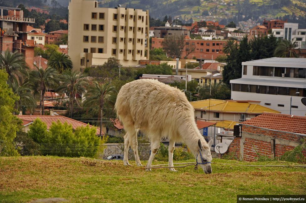 0 15674f 604a8da orig Куэнка – город вечной весны в Эквадоре
