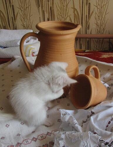 кто же выпил все молоко..и не капельки котенку не оставил