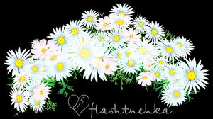 wreath daisies ONBLACK