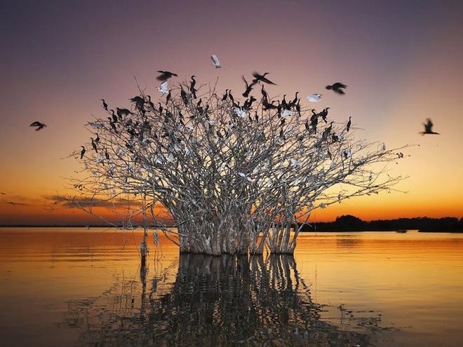 PantanalBrazil.jpg
