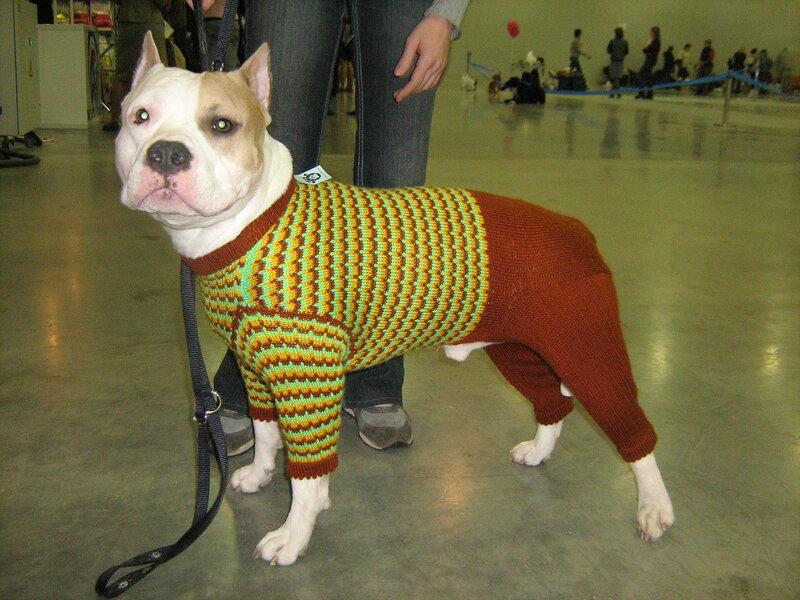 Как связать свитер для крупных собак