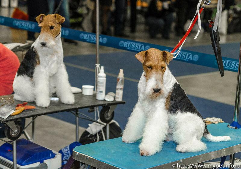 Выставка собак Россия-2015