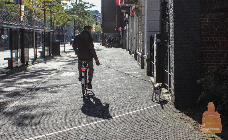 Велосипедист и собака