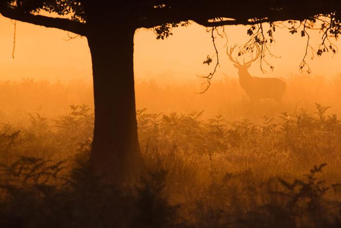 В золотом лесу.