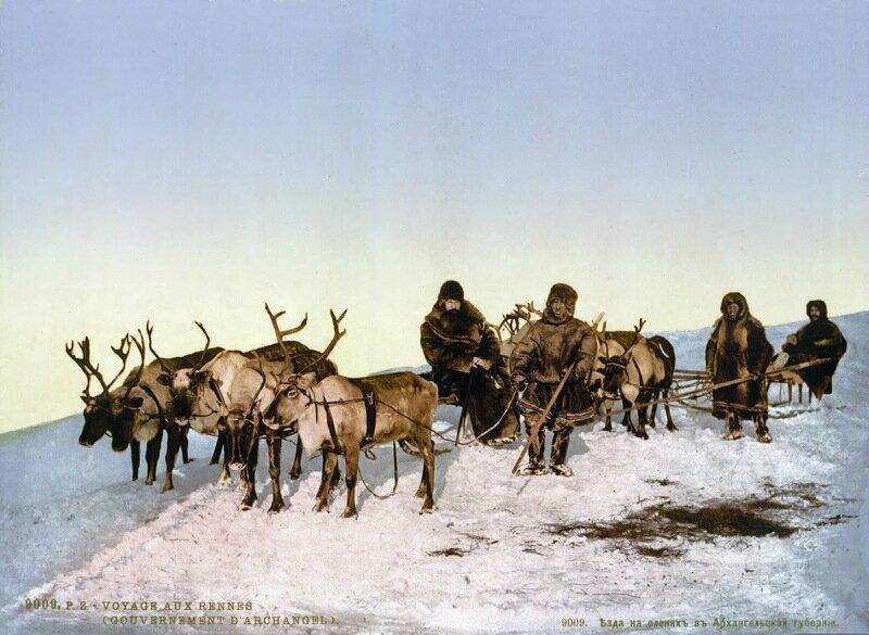Traveling by reindeer, Archangel, Russia, ca. 1890-1900.jpg