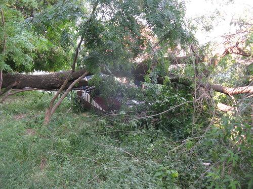 Крушение дерева об автомобиль - Курган - бар Маэстро 1