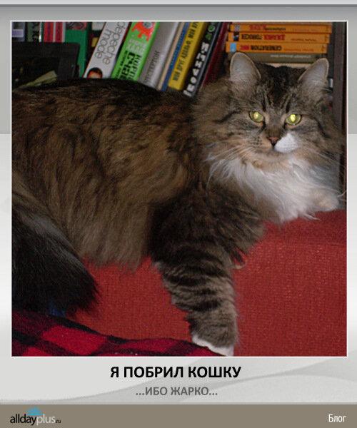 Кошко-панко-тигра by flabad))