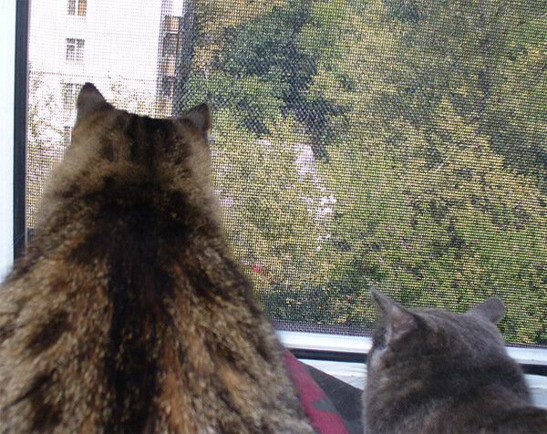 Дуся, Тинки и наглый голубь на карнизе