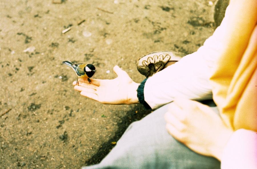 2010, абстракция, город, девушка, животные, кросс-процесс, лето, москва, пленка, плёнка, птица, радость, россия