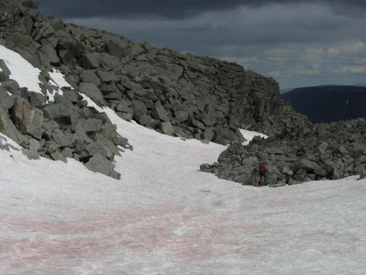 Красный снег в Хибинах