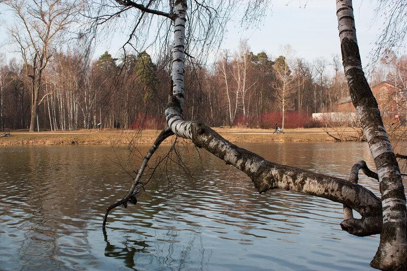 Береза над водой