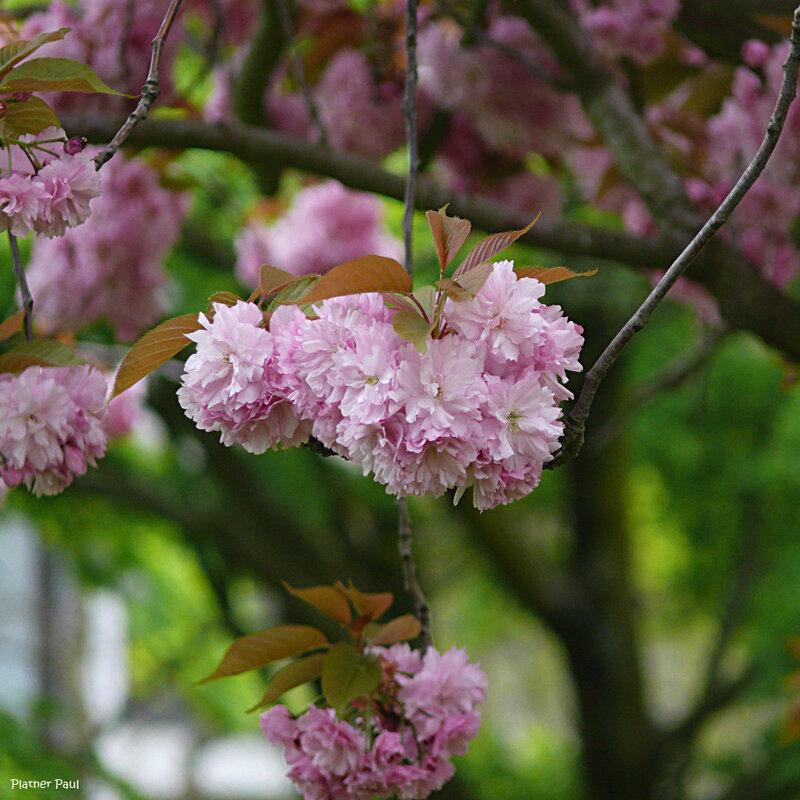 весна в Бонне