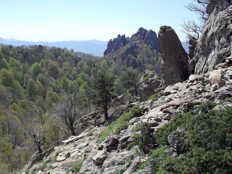 Скалы над лесом