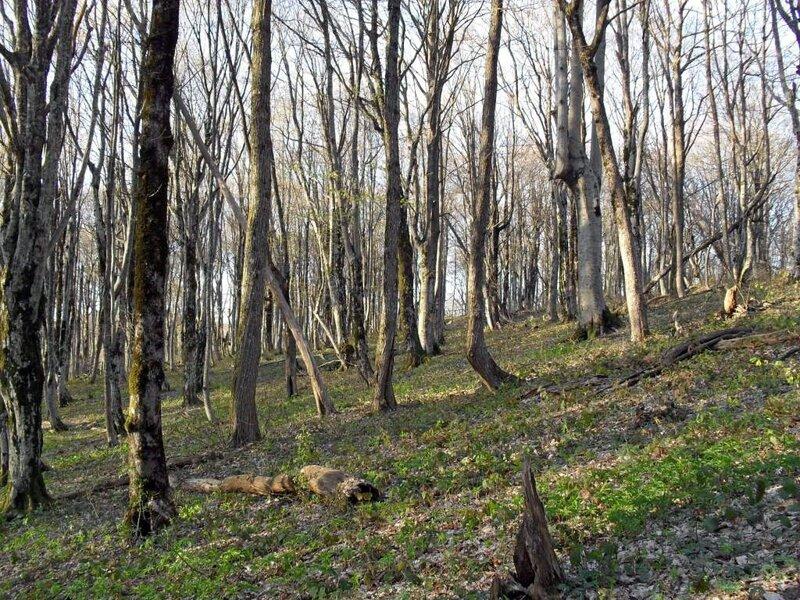 Весенний лес....