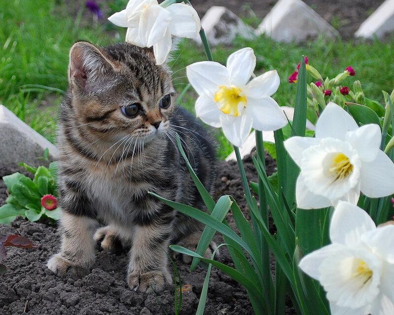 Моя первая весна...