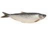 Концентрированный рыбий жир