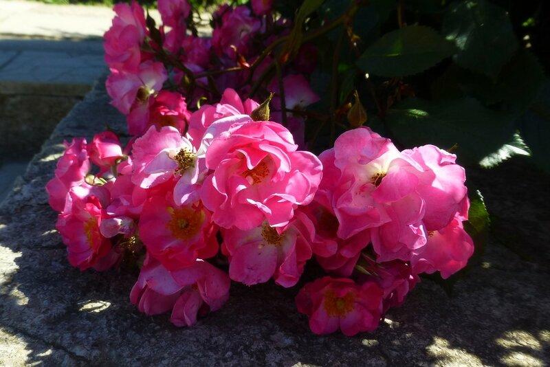 Цветы 2015