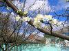 Курганинск в весеннем цвету