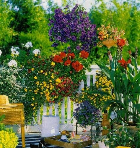 Цветы на балконе. Фото из Сети