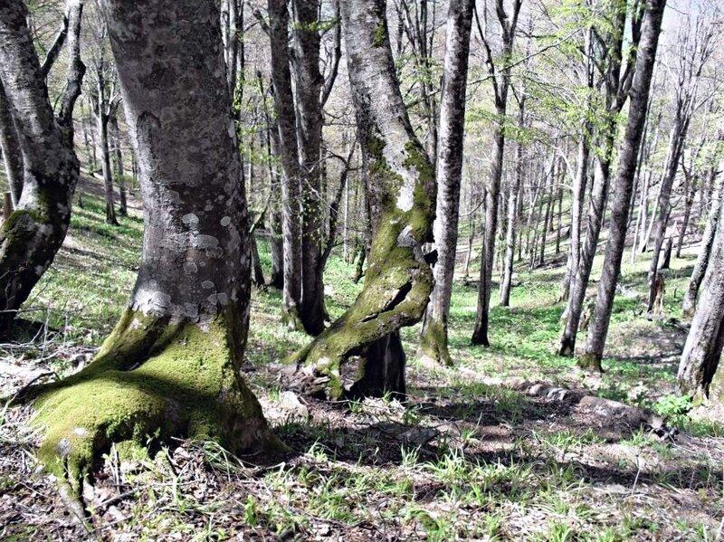 В лесу весеннем ... SDC16087