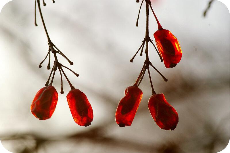 Рубинки