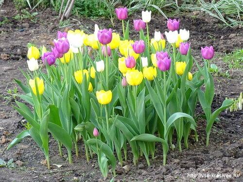 Май, весна, цветы