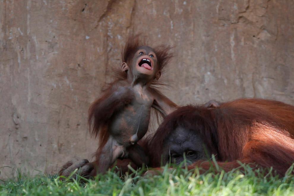 4. Семья львов в зоопарке Майами. (Фото Wilfredo Lee):