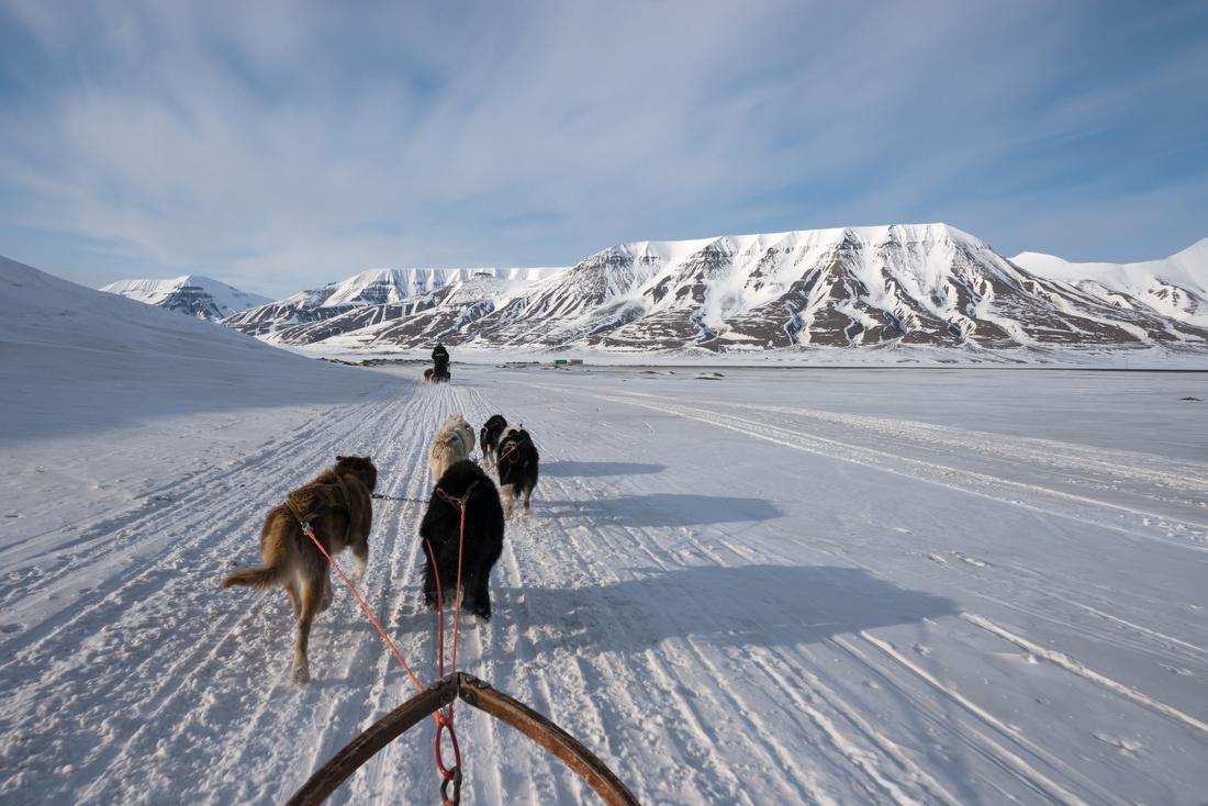 7. Катание на собачьих упряжках — 95 000 руб. Очки, варежки, шарф — и можно отправляться в путь. Ваш
