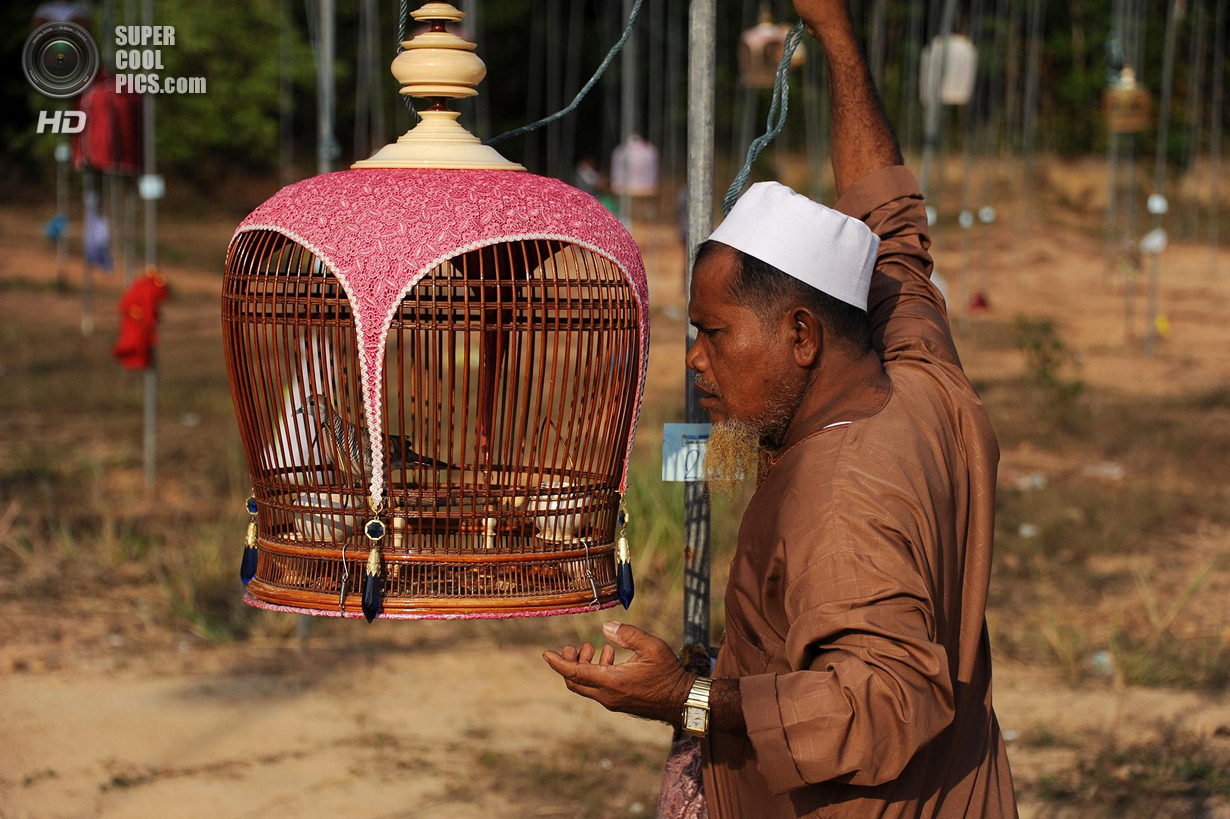 Конкурс птичьего пения в Таиланде