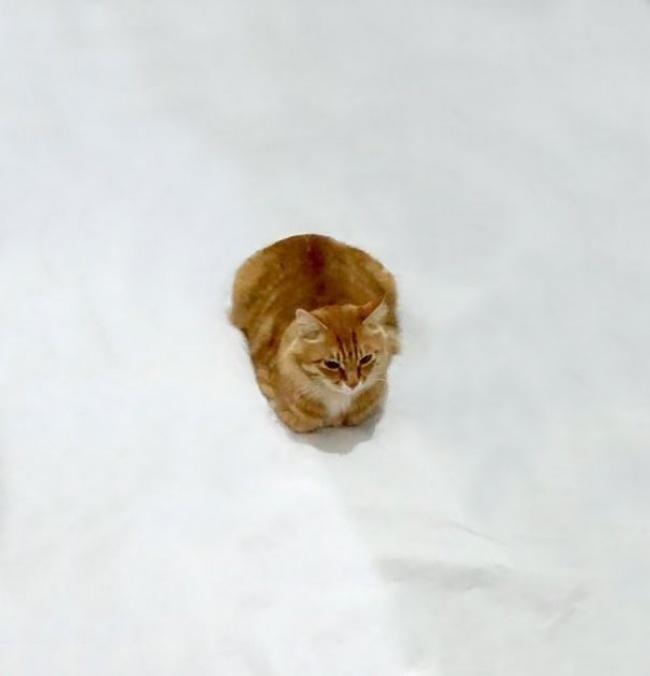 Дорисуй кота