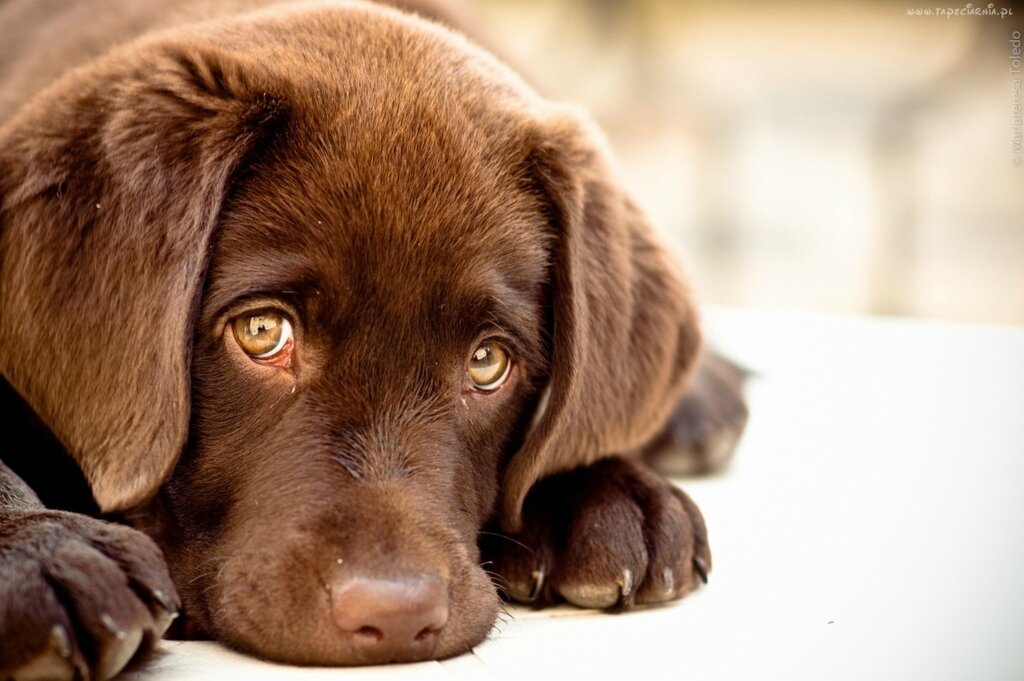грустная собака.jpg