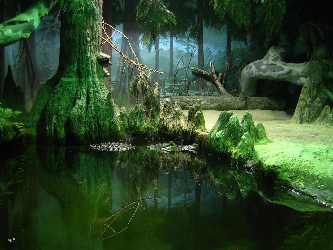 Зоопарк 2008-07-13