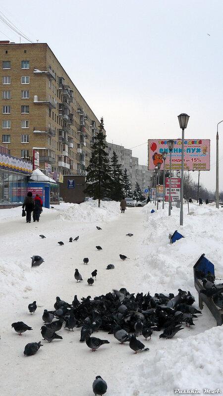 http://img-fotki.yandex.ru/get/4209/art-pushka.32/0_22b65_5c96641f_XL.jpg