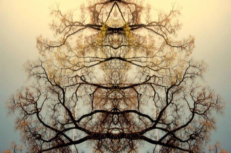 паукомедвед