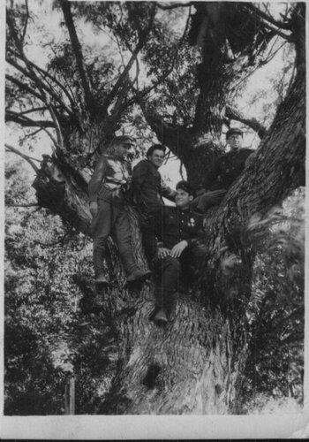 На дереве под г. Паневежис 16.08.1944