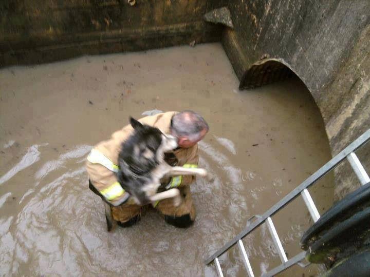 Как люди спасают животных 0 12cff5 dc1a1f6b orig