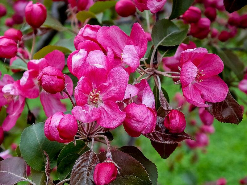 Цветы сегодня