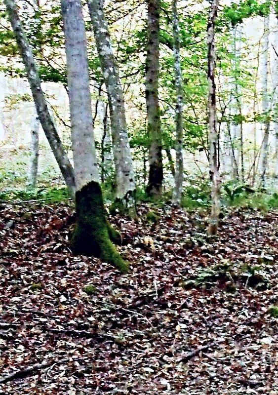 В красках лесной Осени ... SDC15655-3 (64).JPG