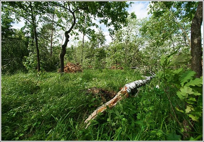 на фото лес. фотографии дизайнера Кирилла Кузьмина
