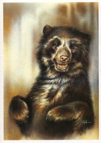 Гималайский медведь, медведь, животные, звери, исаков.
