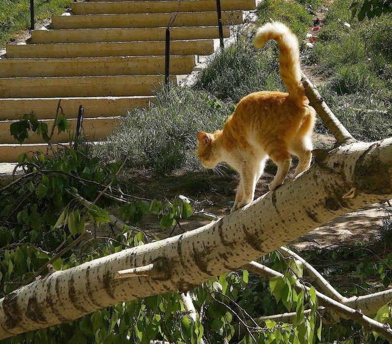 Гулять по дереву стало легче. Спасибо урагану