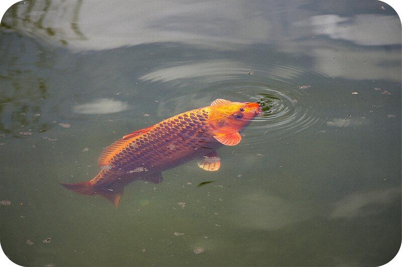 Ещё одна рыбка