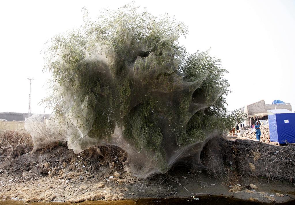 Pauki-i-derevya-7-foto