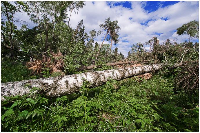 лес. фотосъемка пейзажей и ландшафтов