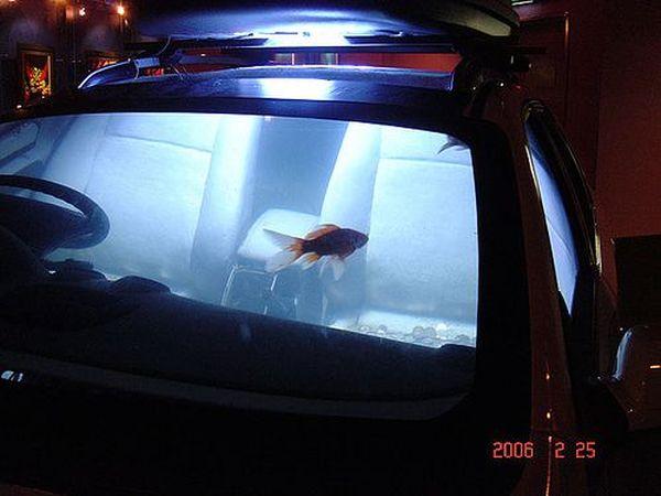 Машина - аквариум