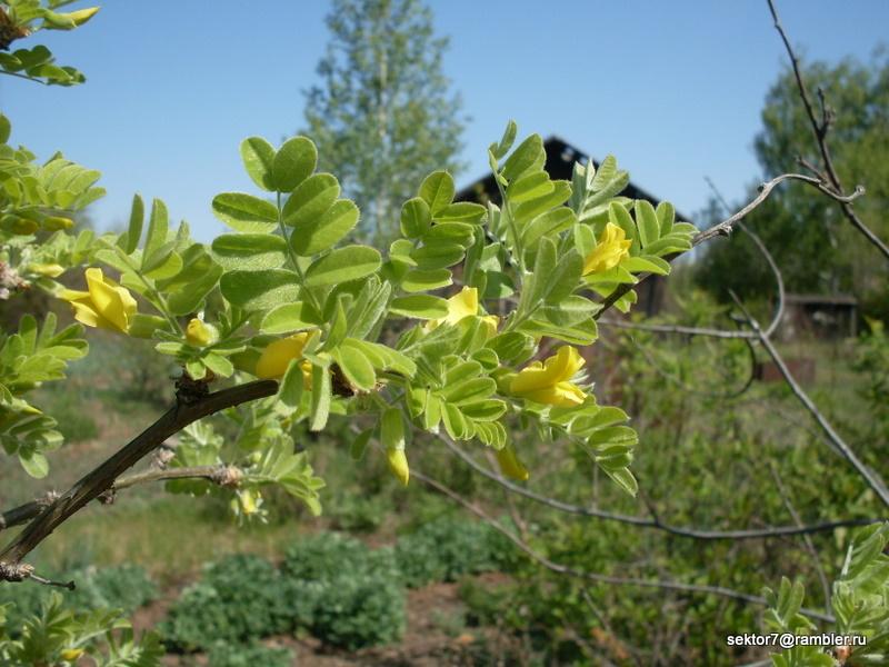 Как цветут разные деревья
