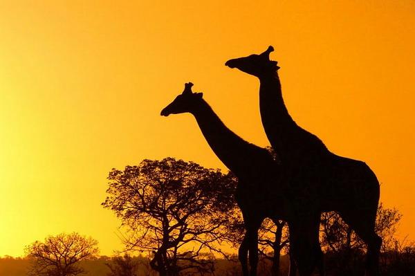 Африка во всей красе